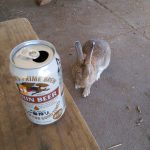 Beer and Bunny